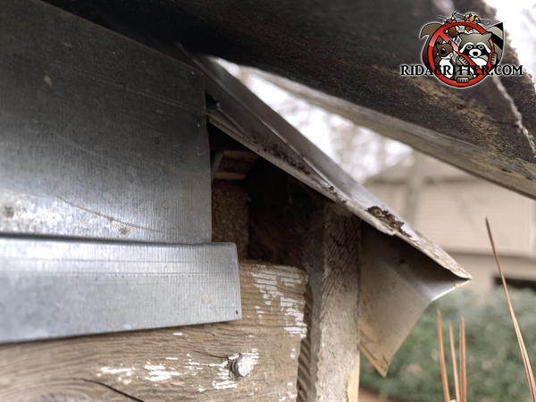 Rectangular gap at the end of the roof flashing allowed rats to get into the attic