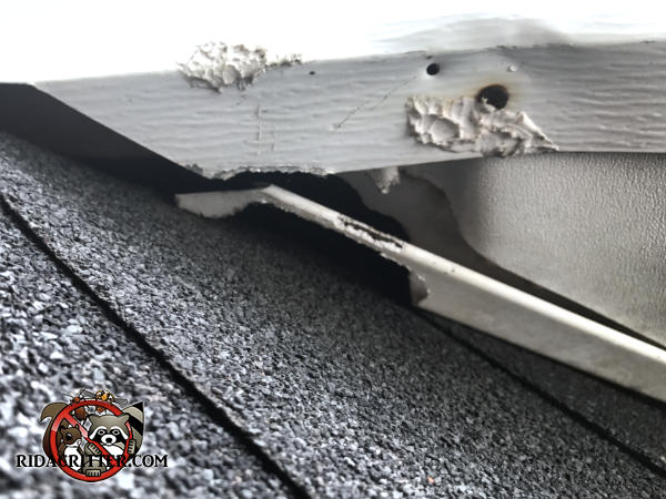 Roof rats chewed through the vinyl and metal trim at a roof junction to get into the attic of a house in Newnan Georgia