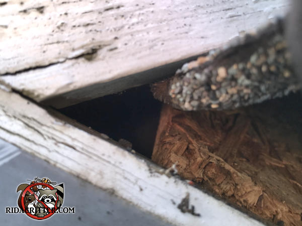Triangular construction gap of about an inch and a half in the roof allowed rats into a house in Roswell Georgia