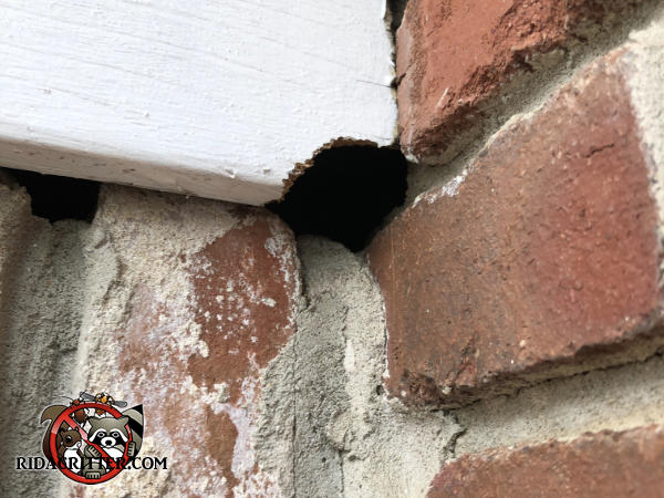 Quarter sized hole in the trim and the mortar between the bricks of a house in Vestavia Hills Alabama