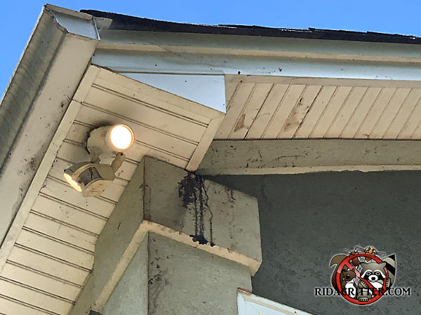Roof rat urine stains dripping from the soffit onto a post on the outside of a house in Red Bank Tennessee