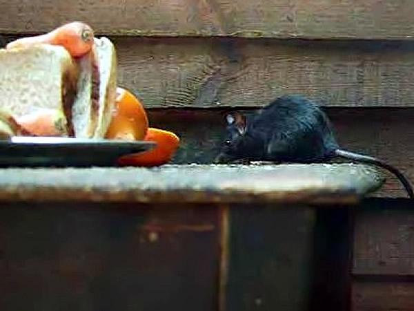 Rodent Control North Ga Birmingham Al