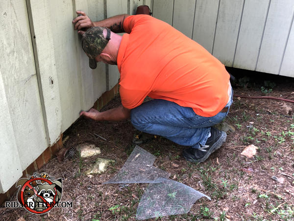 Man crouching outside a house in Marietta Georgia feeling for openings behind the siding to seal rats out of the house
