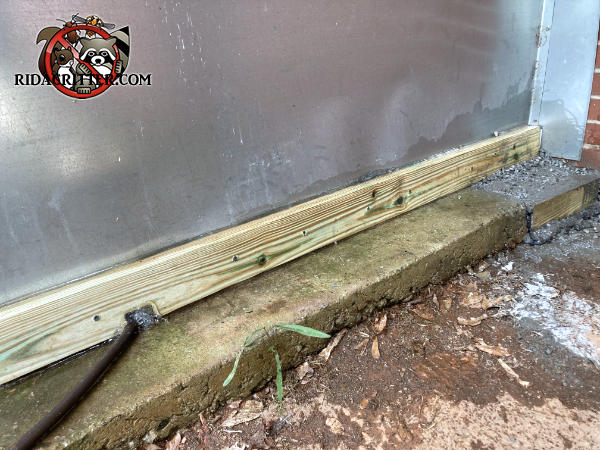 Wooden cement form boards installed around the base of a large commercial air conditioning unit outside a building in Atlanta to keep Norway rats from getting under the air conditioner