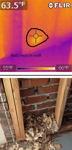 Thermal Imaging Picture of a Rats' Nest