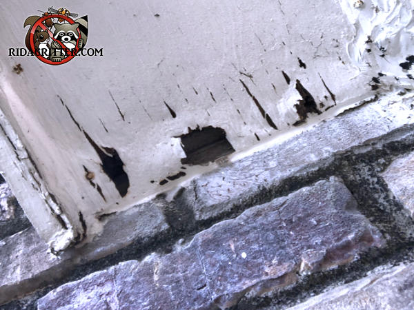 Edge of the soffit panel on a house in Atlanta was water rotted and allowed roof rats to get into the soffit