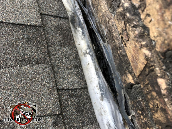 Gap in the flashing by the chimney of a house in Atlanta led to water damage that allowed roof rats into the house