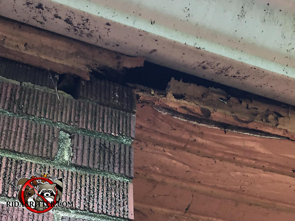 Water damage to the fascia behind the rain gutter of a house in Macon Georgia rotted the wood and allowed roof rats into the attic