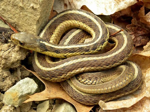 Snake Removal Snake Control Birmingham Alabama Area