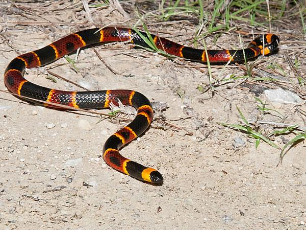 Snake Removal Amp Control North Georgia Alabama South