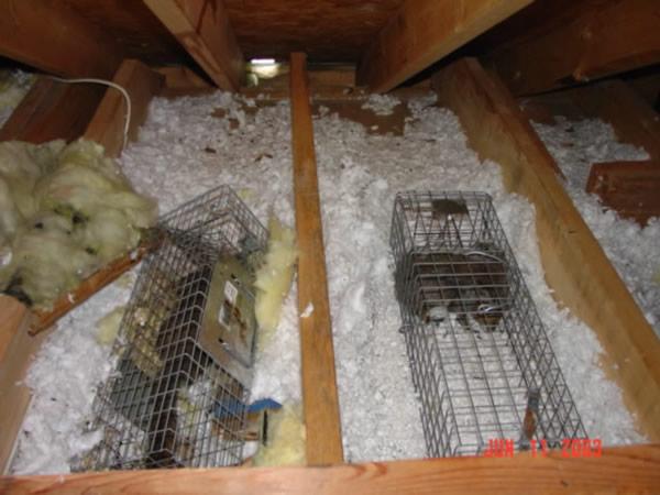 Metro Atlanta Squirrel Removal And Squirrel Proofing