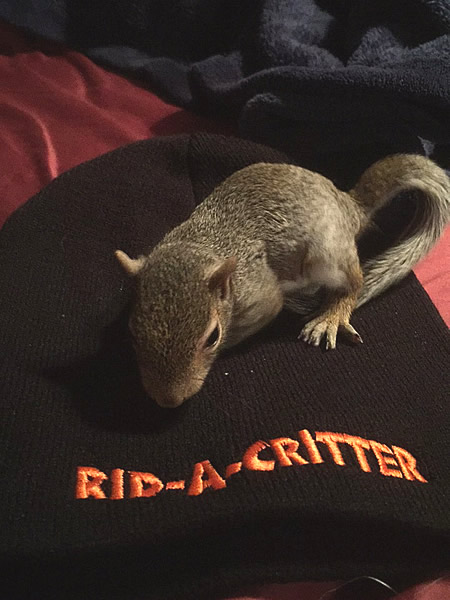 A Friendly Baby Squirrel We Removed From Home