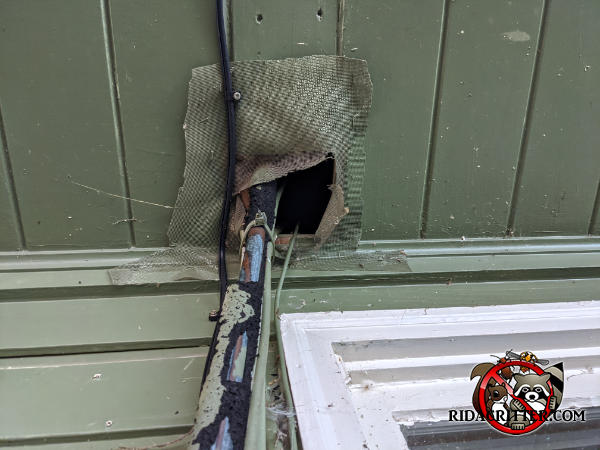 Squirrel gnawed right through window screen material that the homeowner tried using to seal around pipes going into the soffit of a house in Chattanooga