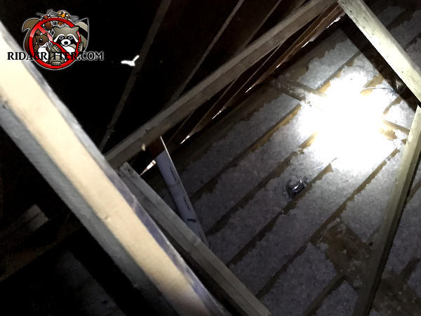 Sunlight shining through opening in the eaves of the attic of a house in Atlanta that allowed squirrels into the house
