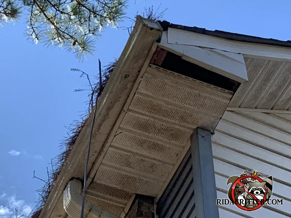 Clogged rain gutters caused water damage that caused a soffit panel section to fall out and allowed squirrels to get into the soffit