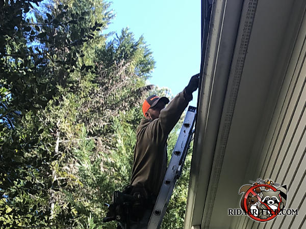 Man on a ladder sealing squirrels out of the attic of a house in Brookhaven, Georgia