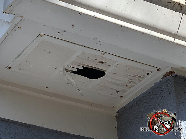 Squirrels gnawed a hole right through the middle of a sheet metal soffit vent to get into the attic of a house in Johns Creek Georgia