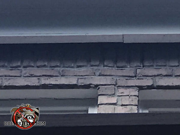 Three inch gap between the frieze board and the brick wall that allowed squirrels into a house in Alpharetta Georgia