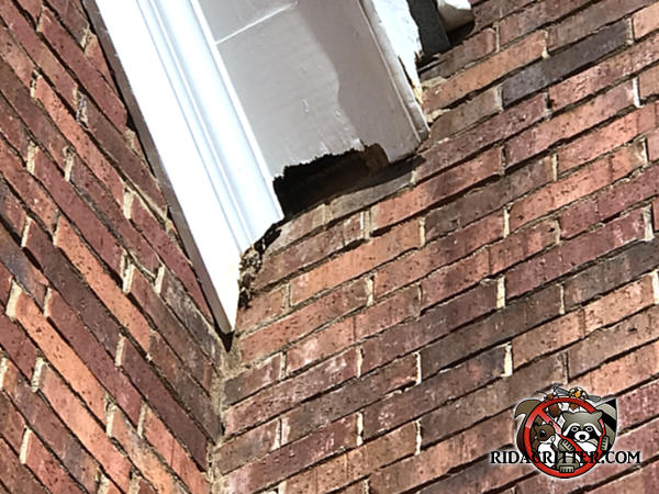 Squirrel chew hole at the junction of a pitched roof soffit and the brick wall of a house in Buford Georgia