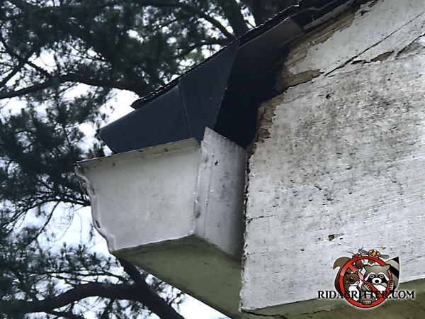 Squirrel chew hole in the wooden trim behind the rain gutter of a house in Decatur Georgia