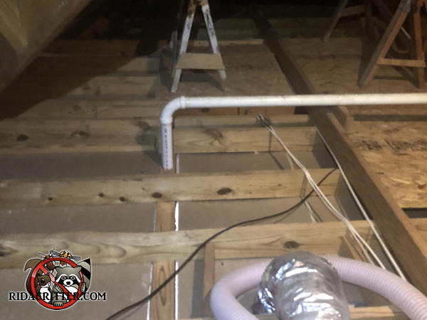 The unfinished attic of a house in Zebulon Georgia is clean after squirrel droppings and contaminated insulation have been removed.