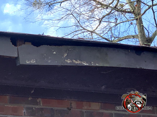Squirrels gnawed three holes through the roof fascia of a house in Athens Georgia