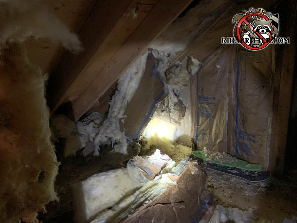 Squirrels tore the fiber glass insulation from the walls and from between the rafters in the attic of a house in Ellijay Georgia.