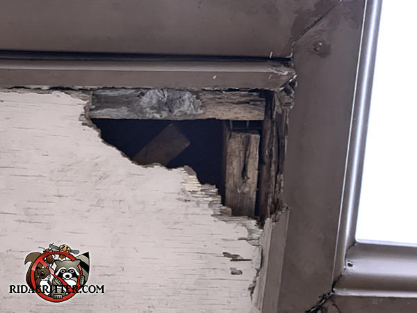 Squirrel gnawed a three inch hole through the corner of the soffit panel of a house in Dallas Georgia