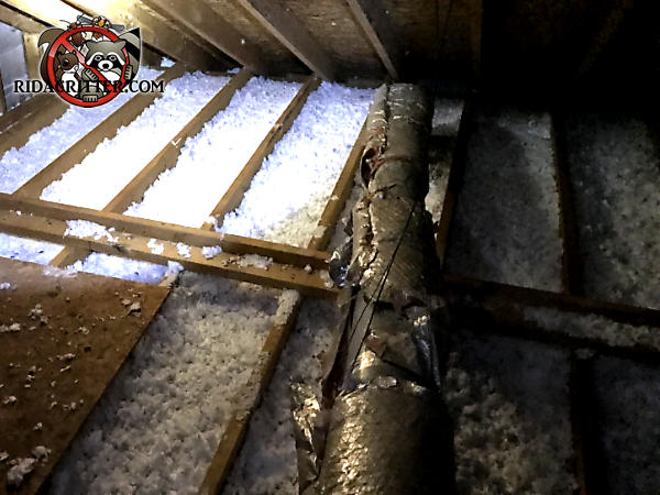 Squirrels tore the insulation off the heating and air conditioning ducts in the attic of a house in Atlanta