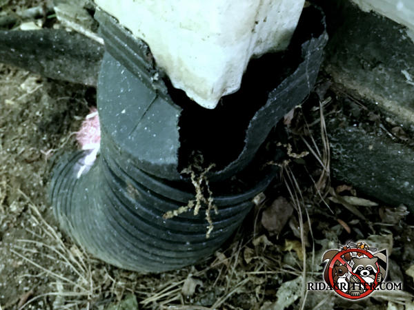 Squirrels chewed through the French drain to get into the downspout and from there climb to the attic of a house in Buford Georgia