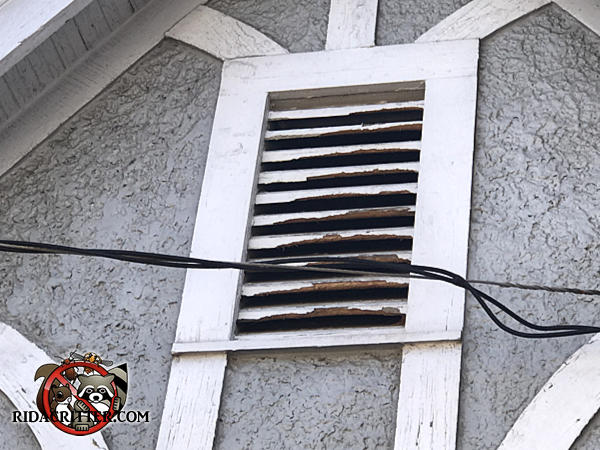 Squirrel gnawed at all the wooden slats of a gable vent on a house in Valdosta Georgia