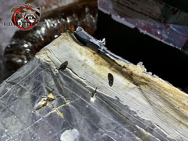 Squirrels gnawed the junction between a rectangular air duct and the heat exchanger in the attic of a house in Atlanta