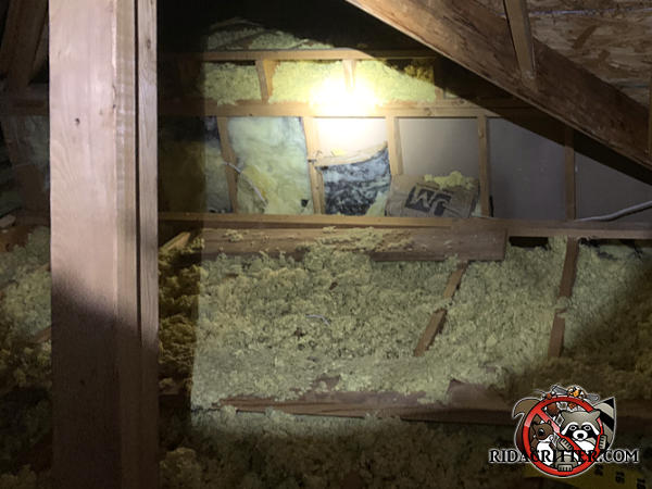 The insulation on the wall has been torn down and that between the joists flattened by squirrels in the attic of a Valdosta Georgia home.