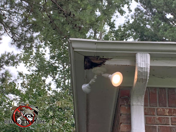 The corner of the soffit behind the rain gutters of a house in Macon Georgia is badly damaged by water and squirrels due
