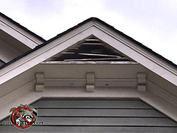 Squirrels chewed all the wooden slats of a gable vent under the peak of the house