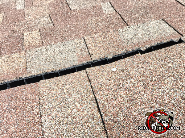 Squirrels chewed all along the plastic ridge vent on the peak of the roof of a house in Atlanta