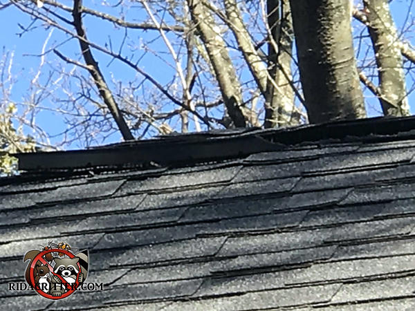 Squirrels chewed the plastic ridge vent on the peak of a house in a semi wooded part of Atlanta