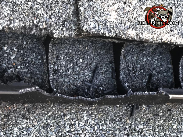 Squirrel tooth marks in a plastic ridge vent on top of a house in Berkeley Lake Georgia