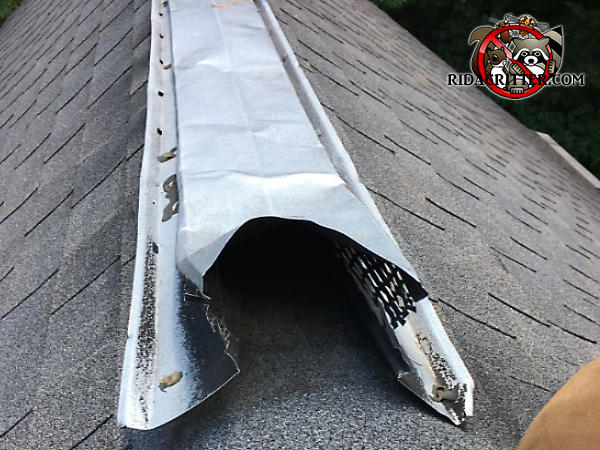 The end of a sheet metal ridge vent on the roof of a house in Stone Mountain Georgia has been bent upwards and partially detached from the roof by squirrels.