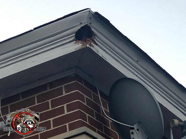 Baseball sized squirrel hole gnawed through the corner of the roof of a brick house in Griffin Georgia.