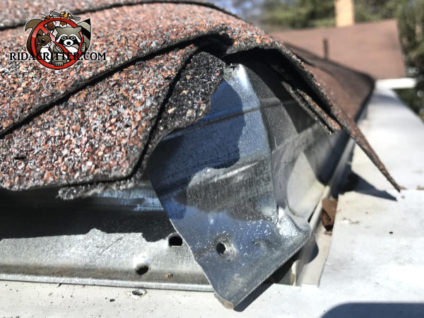 Squirrels trying to get into an Atlanta home chewed the shingles on the corner of the roof
