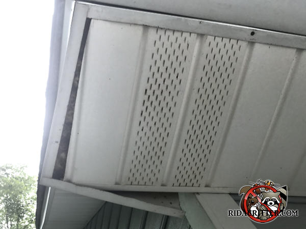 The soffit panel of a house in Acworth Georgia is sagging on one end under the weight of a squirrel nest built on top of the soffit panel.
