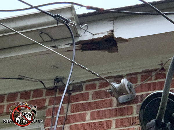 Elongated squirrel hole in the water damaged soffit of a house in Athens Georgia right above the spot where electrical wires are attached to the house.