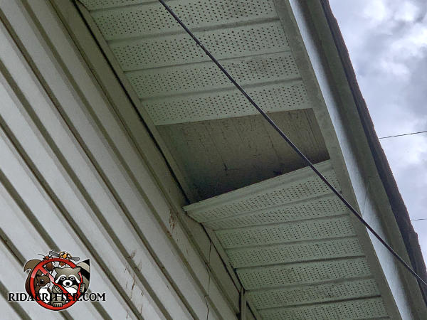 A section of soffit panel is missing and several more are hanging down from the soffit of a house in Chattanooga because of squirrels running on top of the soffit panel