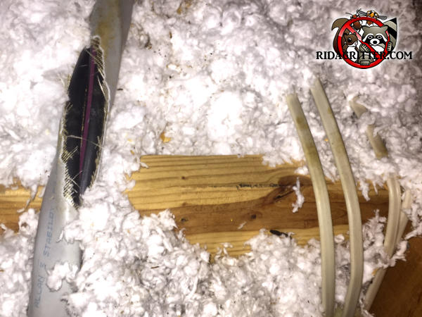 Squirrels gnawed through the outer insulation of electrical wires in the attic of a house in Morrow Georgia