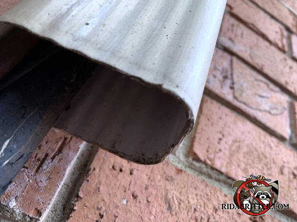 Bottom of a downspout with air conditioning pipe running through it allowed squirrels to climb into the attic of a house in Johns Creek Georgia