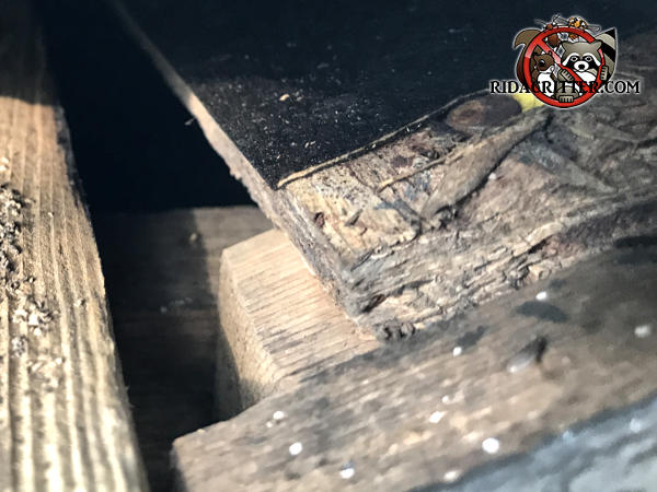 Gap between the roof sheathing and the fascia allowed squirrels into the attic of a house in Alpharetta Georgia