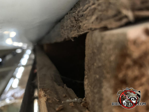 Gap of about two inches between the roof sheathing and the fascia allowed squirrels into the attic of a house in Alpharetta Georgia