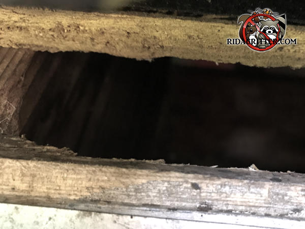 Two inch squirrel entry gap with a bit of gnawing on the wood between the roof sheathing and fascia of a house in Stone Mountain