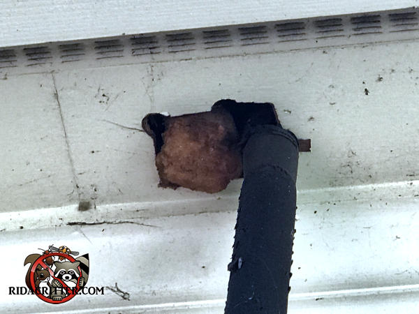 Gap around an insulated pipe where it passes into the soffit allowed squirrels into a house in Birmingham Alabama